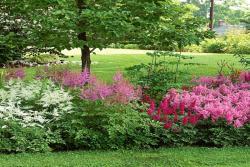 落新妇一年开几次花,种植需要注意些什么?