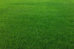 [多年生黑麦草]多年生黑麦草种子批发价格_种植方法
