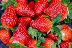 草莓品种哪个好吃,草莓品种怎么选择