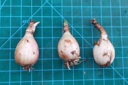 风雨兰终极爆花种植方法(多图干货)