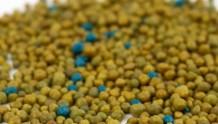 冬天,该施缓释肥啦!月季的常用肥料详解!