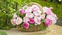 零基础插花指南,让你的月季从花园美到家~