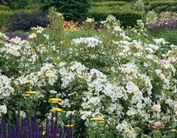 邱园(Kew Garden)