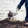 盆栽藤本月季怎么种植