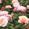 遥远的鼓声:听声、闻香、观花