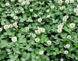 装饰你的花园,月季和哪些植物更配呢?