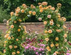 三角梅和月季哪个容易种植