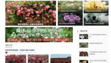 中国月季网、南阳月季网、月季网这几家月季网站有什么不同