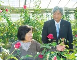 河本纯子|40年孕育出40款新月季的女性育种家