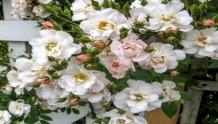 花环THE GARLAND