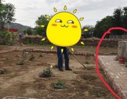 月季小白购买种植初体验(六)——完美的地栽