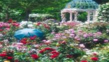 日本京成玫瑰园,拥有近1500个品种的月季基地