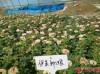 目前市场上月季苗价格多少钱一棵