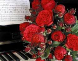 钢琴(piano)