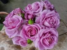 紫色阳台Purple Terrazza