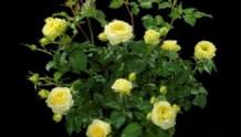 柠檬阳台Lemon Terrazza