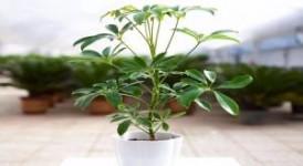 盘点几款具有净化二手烟作用的家居绿植