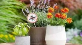 哪些花园植物具有驱蚊功效?