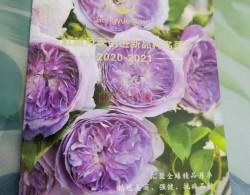 月季蓝莓蛋糕开箱及种植方法分享