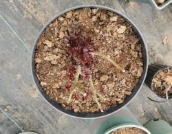 如何买到便宜又好用的月季种植基质
