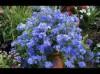 推荐3款适合夏天好看又好养的花
