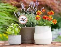 哪里花园植物具有驱蚊功效?